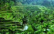 Beautiful rice terraces