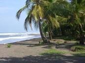 La playa de tortuguero