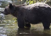 and bears