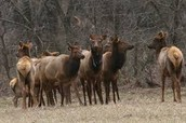 animals that you can find in the buffalo river