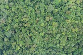 Birdseye View of a Forest in Kenya