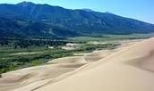 grass sand dune
