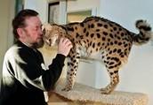 Wild Animals As Pets