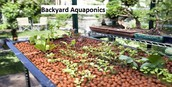Some Basics For Consideration With Secrets For Backyard Aquaponics