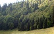Высокогорный лес