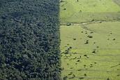 Área devastada X Floresta remanescente