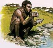 Homo habilis using it's tools