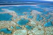 Reef Organisms