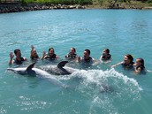 Come and swim with dolphins at Dolphin Cove!