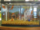 One Fish, Two Fish, Our Fish, New Fish