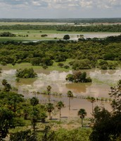 A Flooded Grassland