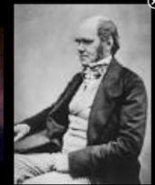 Darwin Papers