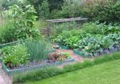 Gravel Back garden Plants -- Learn How To Create a Gravel Garden