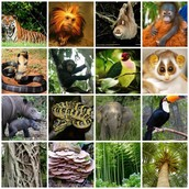 organisms of the rainforest