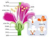 סיכום שיעור מדעים- זרעים ופרחים- עמית בר