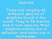 Species of dolphins