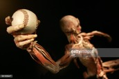 Science- Body Systems