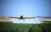 Crops being sprayed with DDT