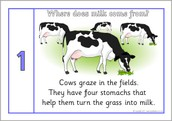 Where Does Milk Come From
