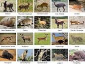 drakonsberg animals