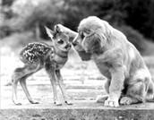 Be kind, always...