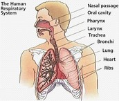 What body system does pneumonia affect?