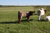 Lot 31 and Lot 15B