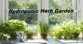 Some New Challenges For Hydroponic Herb Garden