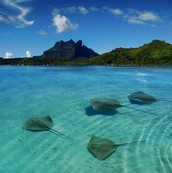 stingrays swimming in their habitat