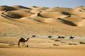 100ft. Dunes