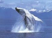 לוויתן קופץ