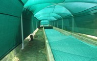 Shadecloth Covered Worm Breeding Beds