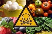 All About Foodborne Illness