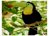 Especies introducidas en islas