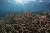 Another Dead Coral Reef