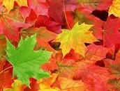 Examining Leaves