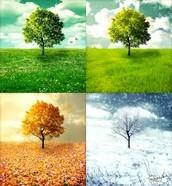 The 4 seasons of a Tree