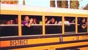 Purple Zoo Rooter Bus