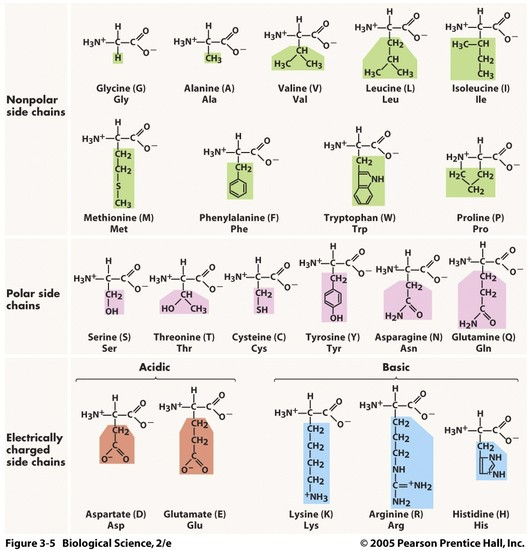 Biochemistry  Smore