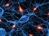 How Autism impacts the central nervous system