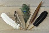 Josephine's feathers pens