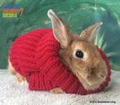 Stella Bunny