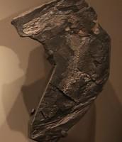 Fossil of a Westlthiana