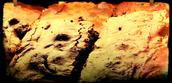 Edited Brownie Photo Using Pixlr