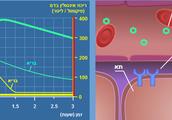 האדם החולה בסכרת 1 ללא הזרקת אינסולין