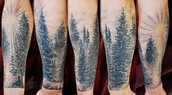 CURIOUS USES OF PINES
