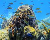 Go snorklig in Dominica