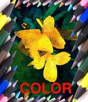 Appreciate Color.