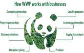 WWF's