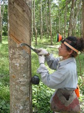 Rubber Tappers Deserve to Stay